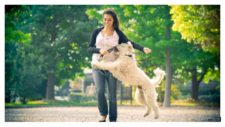 Çrrënjoseni sjelljen e padëshiruar: Si të mësoni qenin që të mos kërcejë mbi njerëz?
