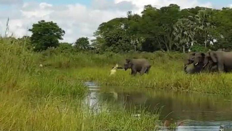 Luftë për jetë a vdekje e elefantit me krokodilin – pamje dramatike të marra nga një varkë aty afër! (Video)