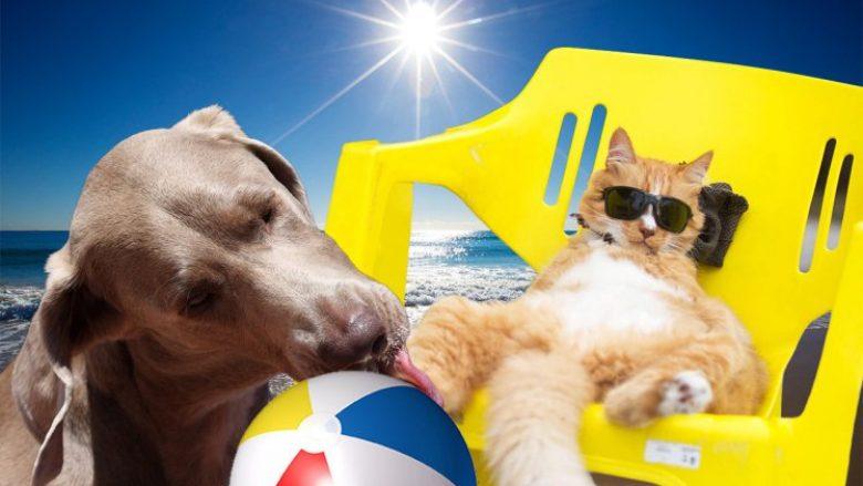 Gjithçka që duhet të dini për kujdesin e qenit gjatë stinës së verës
