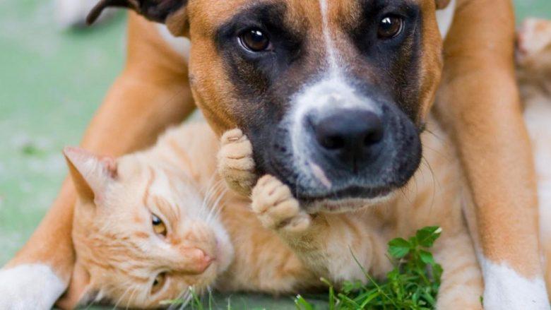 Shkencëtarët e kanë dhënë verdiktin final: Cilët janë më të mirë, qentë apo macet?