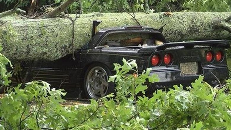 Trungu i pemës shkatërron veturën, shoferi shpëton pa lëndime (Foto)