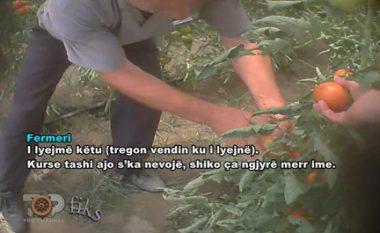 Skandaloze: Stimulantë dhe hormone të rrezikshme te shalqiri dhe domatja e Shqipërisë