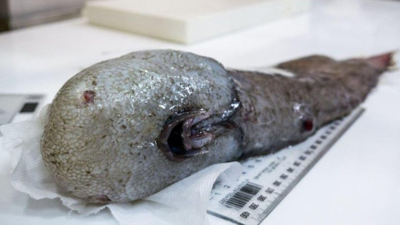 Jashtëtokësorë? Jo, këto krijesa gjenden thellë në oqean (Foto)