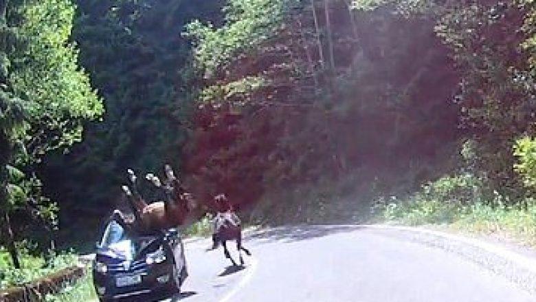 Përplasje e frikshme e kalit me veturën – befasia është se kalin nuk e gjen asgjë, e vetura dëmtohet shumë (Video)