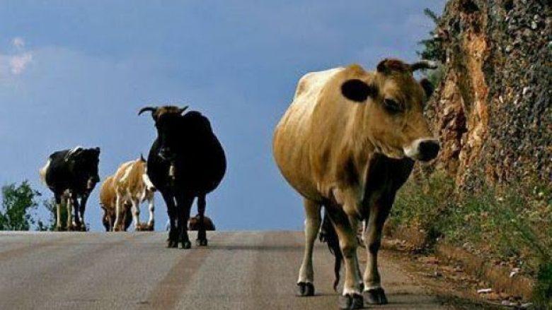 I vidhen lopët nga stalla