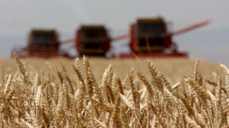 Rendimentet e grurit në Malishevë, rreth 4200 kg për një hektar