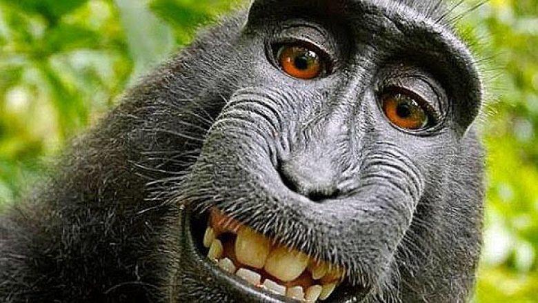 """""""Selfie"""" që po e bankroton fotografin: E drejta e autorësisë i takon majmunit?"""