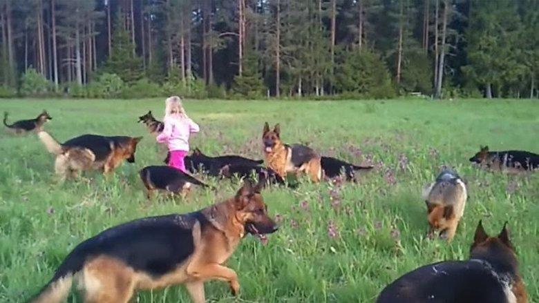 Babai ka lënë vajzën me 14 qen: Pamje të këtillë nuk ka pritur! (Video)