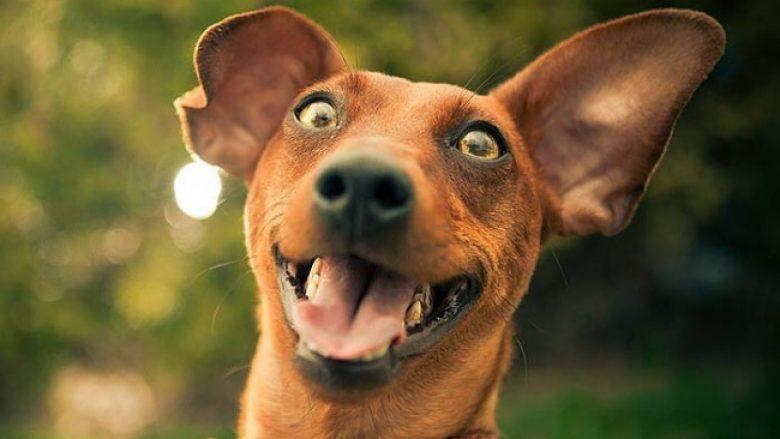 Kush tha se kafshët s'mund të buzëqeshin? Këto fotografi e dëshmojnë të kundërtën dhe ju bëjnë t'i adhuroni kafshët (Foto)