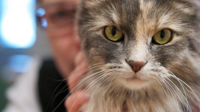 Përse macet bebëzat e syve i kanë vertikalisht? Shkencëtarët kanë gjetur përgjigjen interesante!