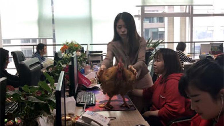 Ndodh edhe kjo, përgatit pulën në zyrë (Video)