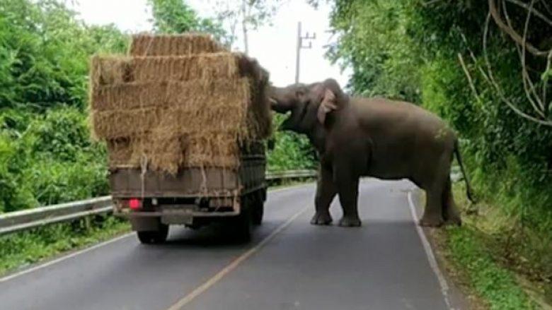 Kamioni ndalohet nga elefanti që donte të merrte sanë (Video)