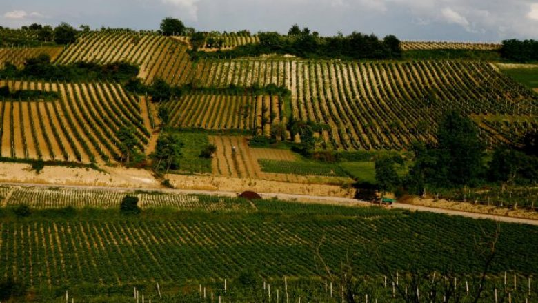 Vijnë reagimet nga Rahoveci pas lajmit se Lista Serbe do të udhëheq me bujqësinë