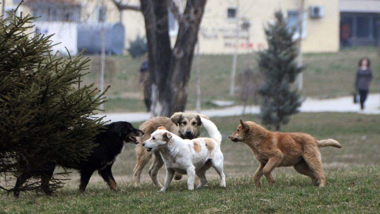 Shkup, harxhime të mëdhaja për kompenzimin e dëmeve në lidhje me qentë endacakë