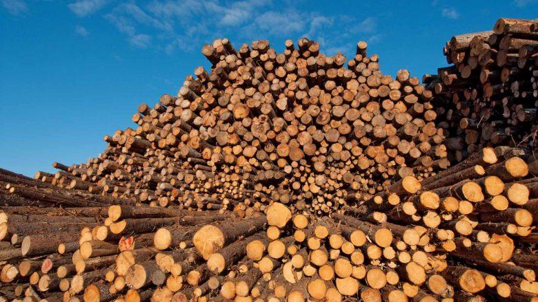 Hapet edicioni i dytë i Konventës së Industrisë së Drurit