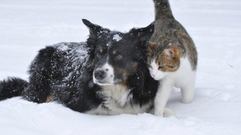 Adhurues të maceve, na vjen keq: Shkencëtarët e kanë dëshmuar se qentë janë më të mençur!