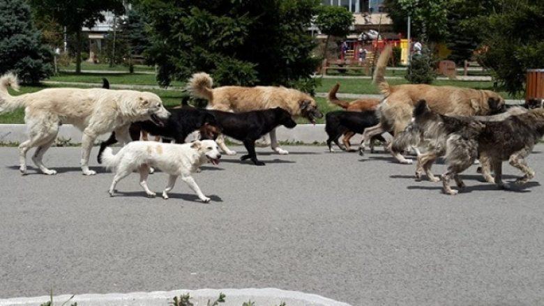 Flora Bujupi, qytetarja që u jep strehë qenve endacakë (Video)