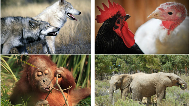 Tetë fakte befasuese për kafshët! (Foto)