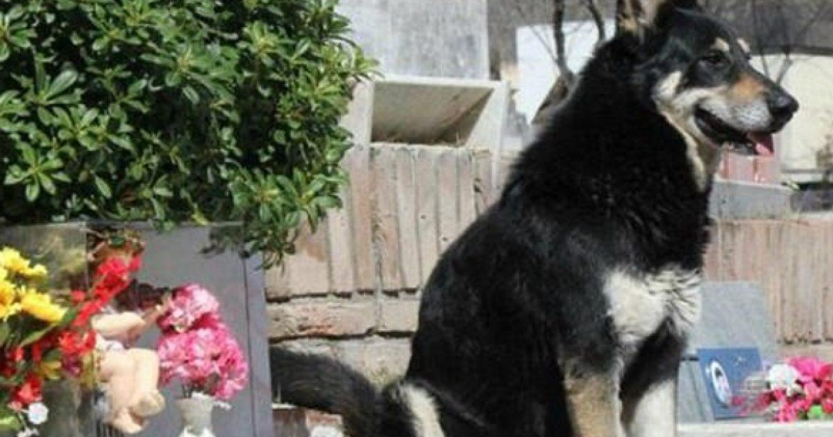 prekese-qeni-kishte-fjetur-prane-varrit-te-pronarit-te-tij-cdo-nate-per-rreth-11-vjet-foto-video