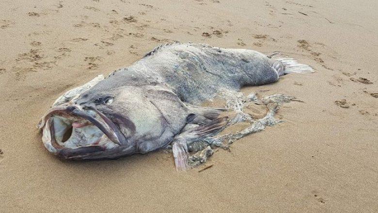 Një peshk mostrum gjendet në brigjet austrialiane (Foto)