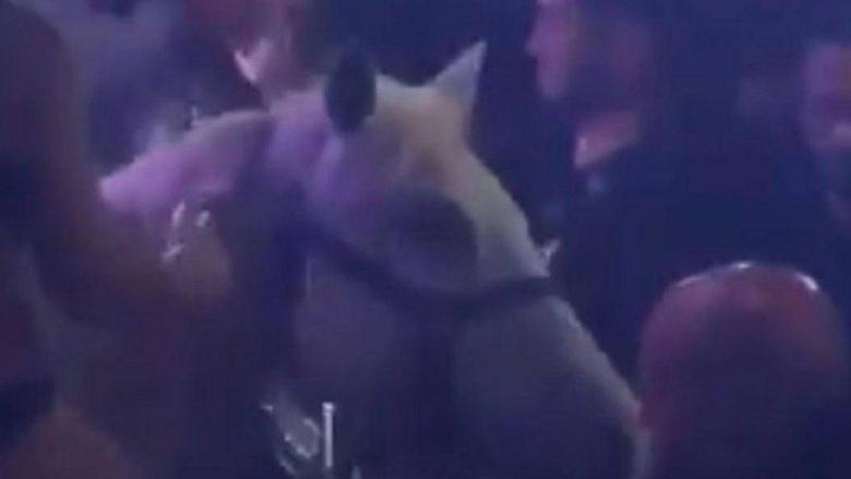 Ofroi spektakël me kalë të bardhë, mbyllet lokali i natës në Miami (Video)