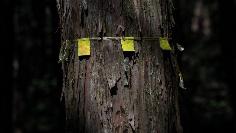 """Në thellësitë e """"pyjeve vetëvrasëse"""" të Japonisë – aty tregohet edhe pse duhet që mos të ndërmerrni një veprim të tillë! (Foto)"""