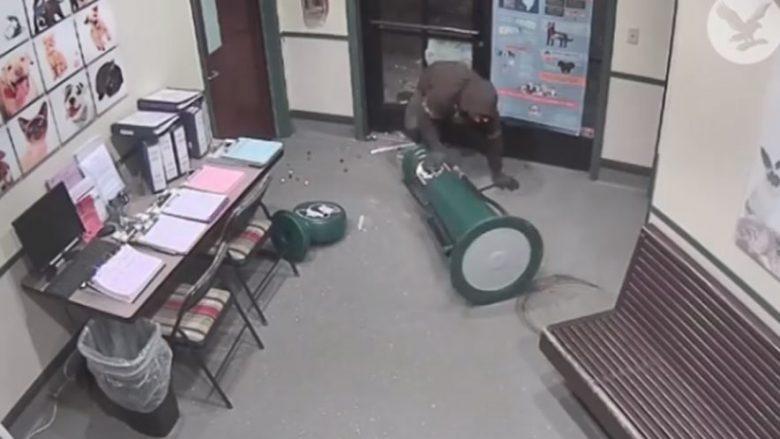 Kur vjedhja nuk shkon sipas planit (Video)
