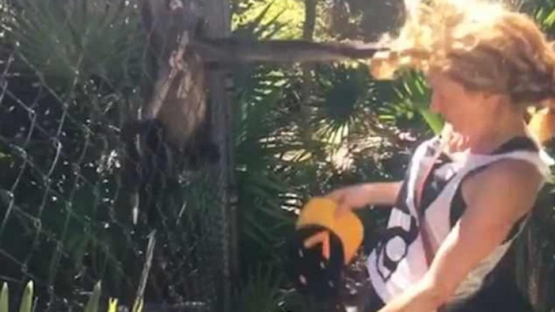 Afrohet së tepërmi te kafazi, majmuni ia shkulë një tufë flokësh (Video)