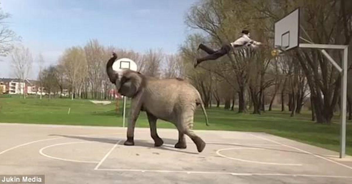 Shënon kosh të mahnitshëm, pasi hidhet në ajër nga elefanti (Video)
