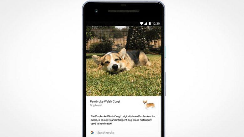 Google ndërton programin për gjetjen e racave të kafshëve