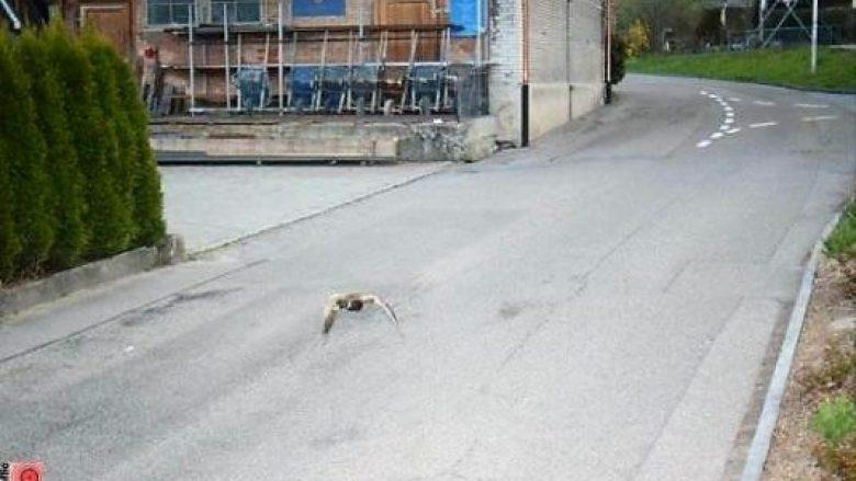 """Një rosë """"pa auto-targa"""" tejkalon shpejtësinë dhe fotografohet nga radari në Zvicër"""