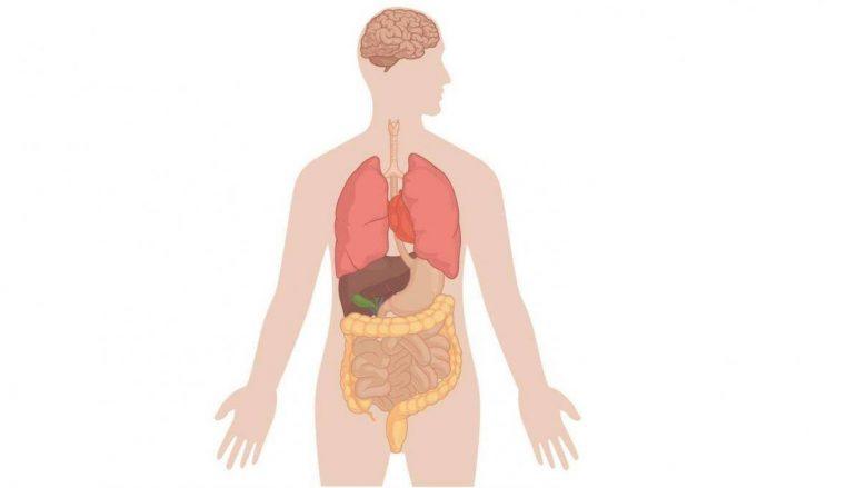 Gjashtë organet e trupit pa të cilat mund të jetojmë