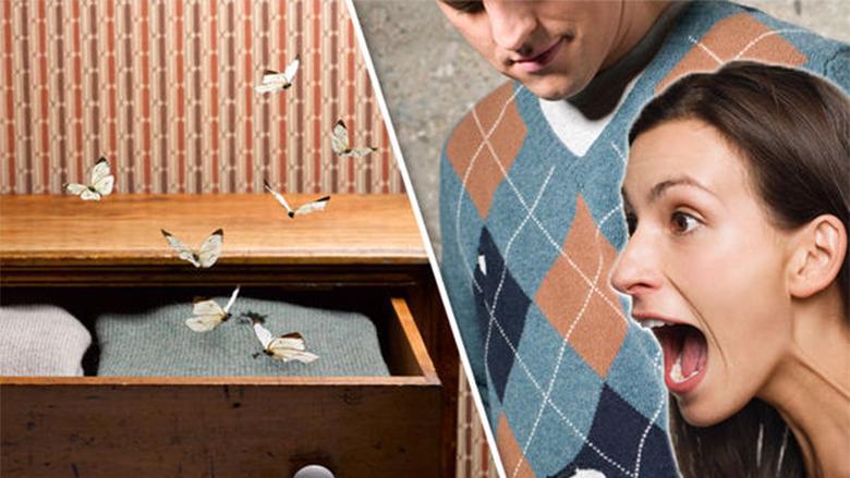 Si të veproni që tenjat të mos jua shkatërrojnë gardërobën: Mbrojtja më efikase natyrale nga dëmtuesit!