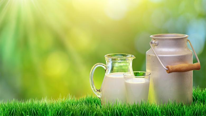 Produkti më i shëndetshëm i qumështit: Shëron çdo gjë, të gjithë mund ta përdorin!