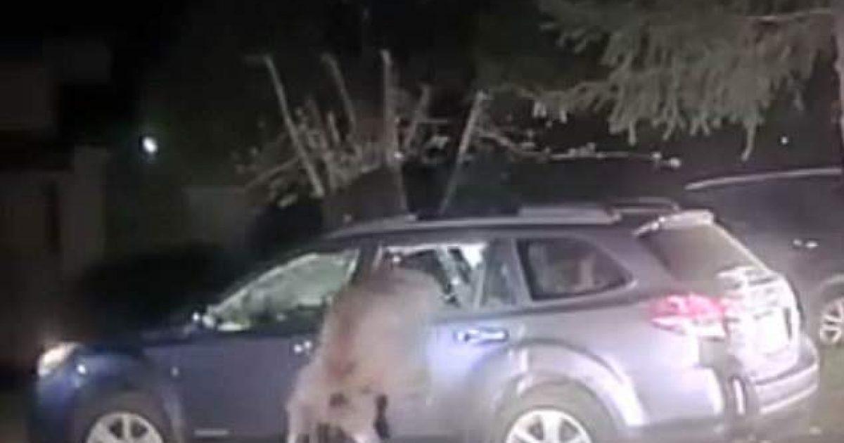 Ariu mbyllet në veturë dhe bllokon dyert, nevojitet të thyhet xhami për t'ia mundësuar daljen (Video)