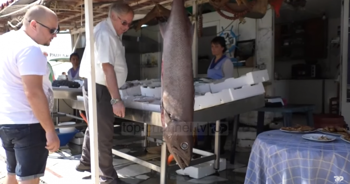 Kapet një peshk i rrallë në ujërat e Vjosës (Video)