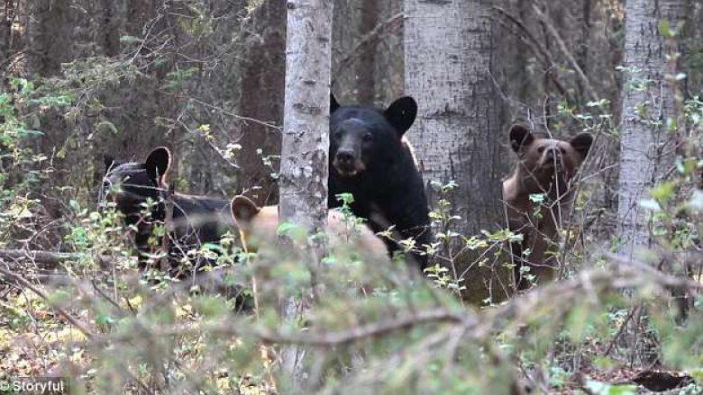 Gjuetari kanadez filmon ariun me të vegjlit, për pak sa nuk e pëson kur i vërsulet kafsha e egër (Video)