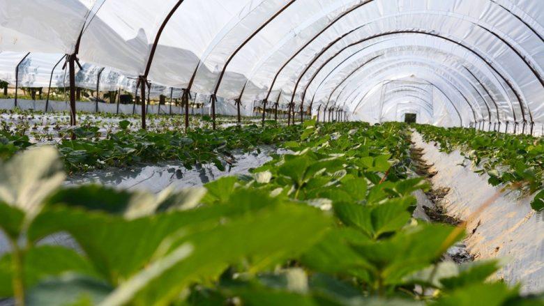 Sektori i bujqësisë me pjesëmarrjen më të madhe të vendeve të punës në Kosovë