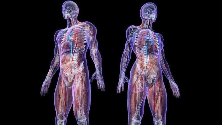 Xhirim i paparë: Si përhapet kanceri në organizëm (Video)