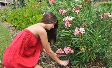 Oleandri zbukurues është një ndër bimët më helmuese, por edhe më të preferuara të kopshtit