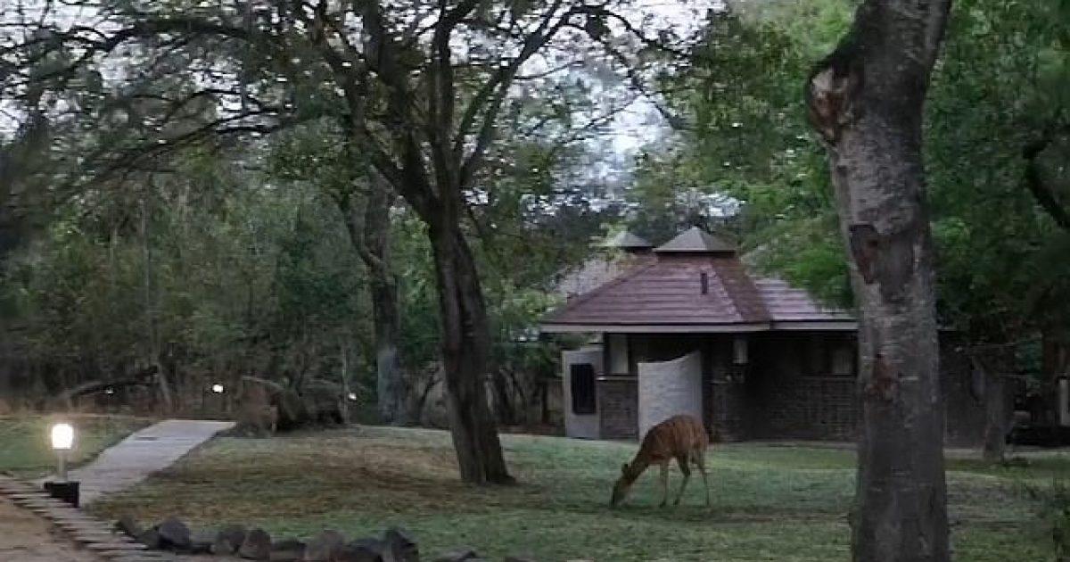 turistja-filmon-momentin-kur-leopardi-mbyt-antilopen-per-pak-sekonda-video-18