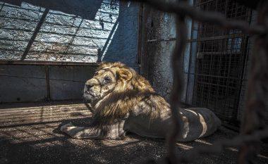Mediat angleze shkruajnë për kushtet e mjerueshme të kafshëve në një kopsht zoologjik në Fier (Foto/Video)