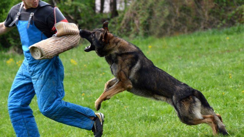 A munden qentë ta nuhasin frikën?