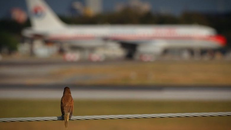Përse zogjtë kryesisht përplasen me motorin e majtë të aeroplanëve?!