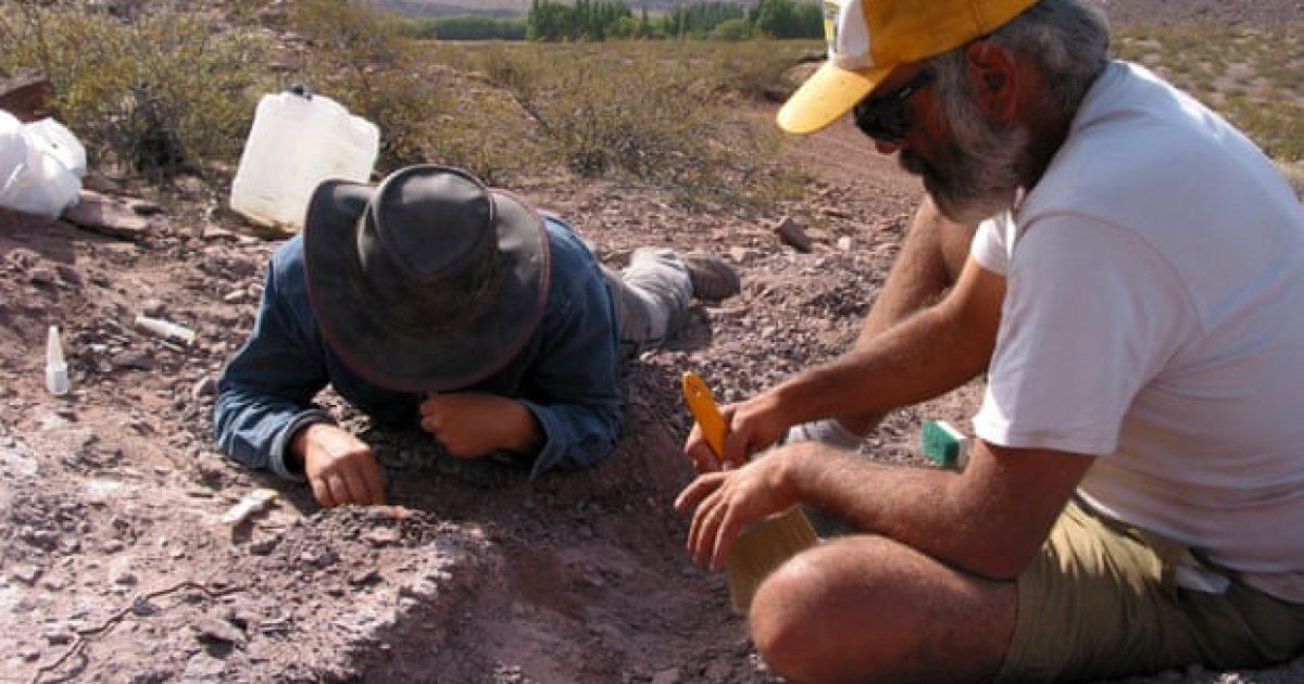 Mbetjet e dinozaurëve në Argjentinë befasojnë shkencëtarët – sepse kafka është e ruajtur tërësisht