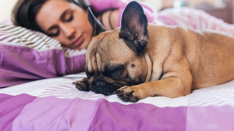 Femrat bëjnë gjumë më të mirë me qenin sesa me një person tjetër