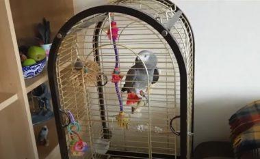 Mjaftoi imitimi i papagallit, e gjithë familja në alarm – aty erdhën edhe zjarrfikësit (Video)