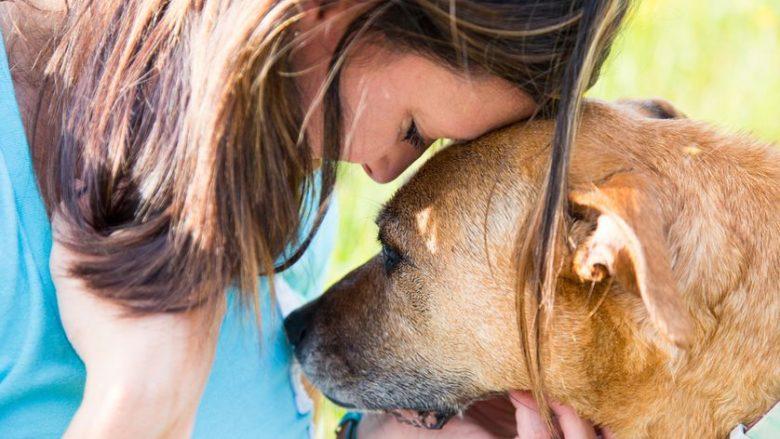 Shtatë gjërat e pazakonshme që mund të nuhasin qentë