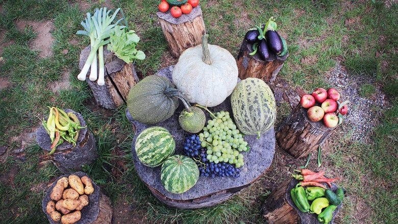 Ekzekutohen subvencione për fermerët në vlerë prej rreth 7.7 milionë euro