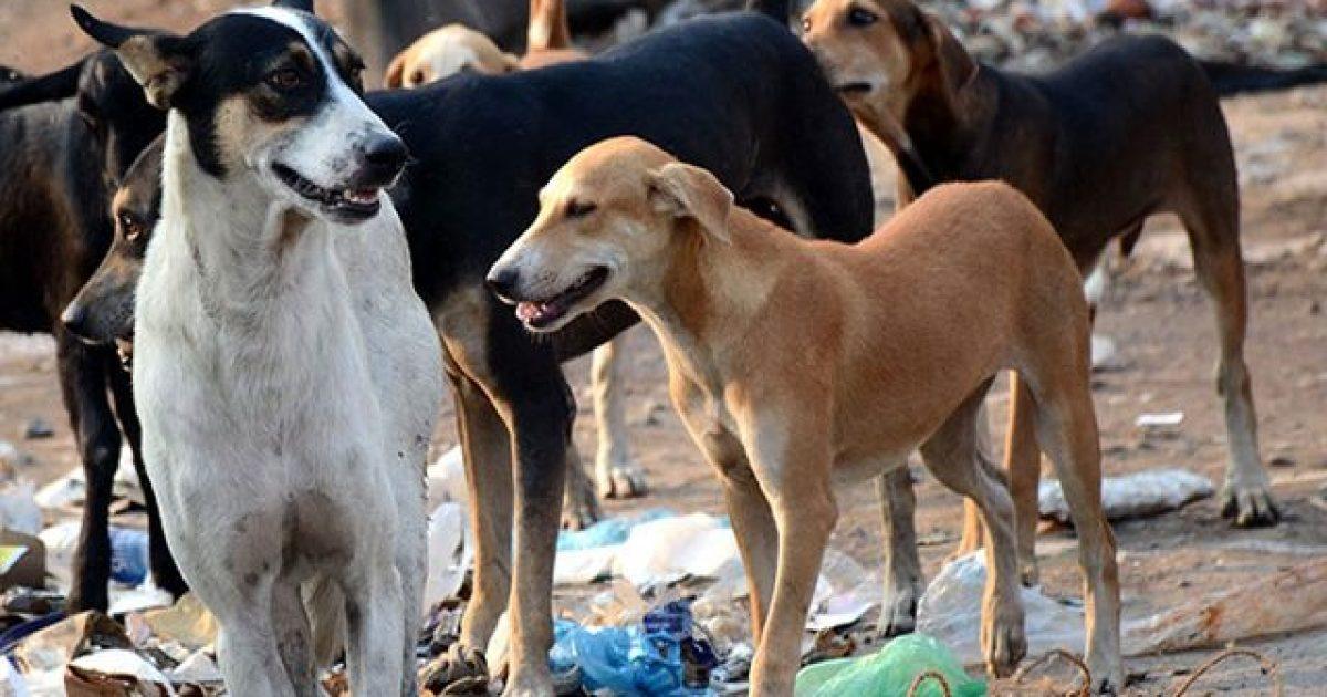 Pejani sulmohet nga qentë endacakë, ankohet te kryetari i Komunës